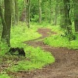 life_path_new_img