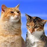 feline_new